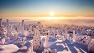 Lappland Urlaub - Schneebedeckte Winterlandschaft