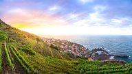 Madeira Urlaub - Weinberge bei Seixal
