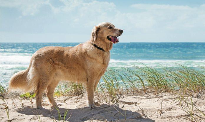 Hund am Strand neben türkisem Meer
